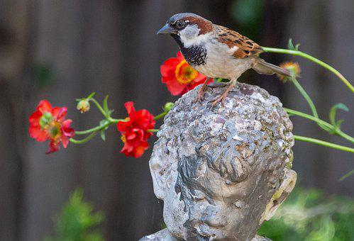 Sparrow On Statue, Sparrow, Hedge Sparrow, Male Sparrow