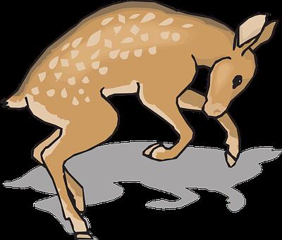Fawn, Animal, Deer, Nature, Wildlife, Young, Natural
