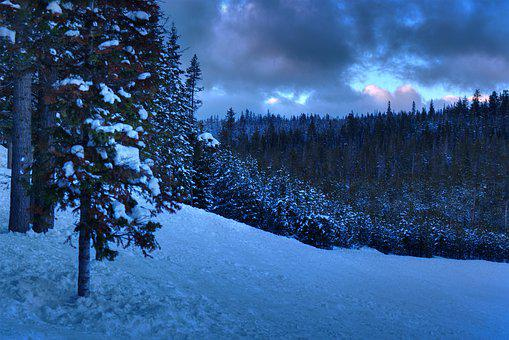 Forest, Snow, Oregon, Bend, Pacific Northwest