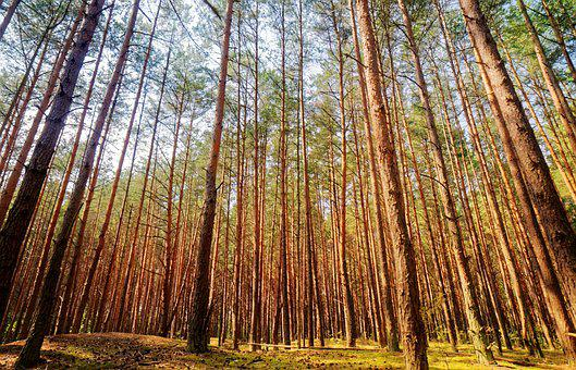 Landscape, Nature, Forest, Trees, Leaves, Colors, Green