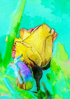 Rosa, Flower, Plant, Garden, Flowering, Natural