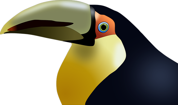 Toucan, Bird, Tropical, Colorful, Animal, Exotic