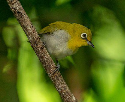 Bird, Small, Yellow, Beak, Branch