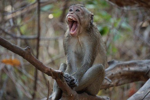 Monkey, Wildlife, Nature, Animal, Jungle
