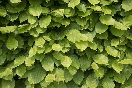 Green Wall, Garden, Nature, Blue, Flowers, White