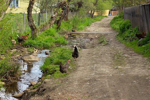 Village, Road, Birds, Khoury, Backwoods, Cock, Chicken