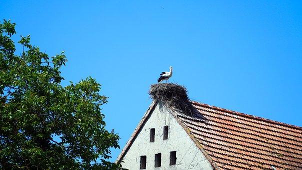 Storchennest, Stork, Nest, White Stork