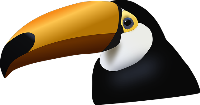 Toucan, Bird, Tropical, Animal, Colorful, Nature