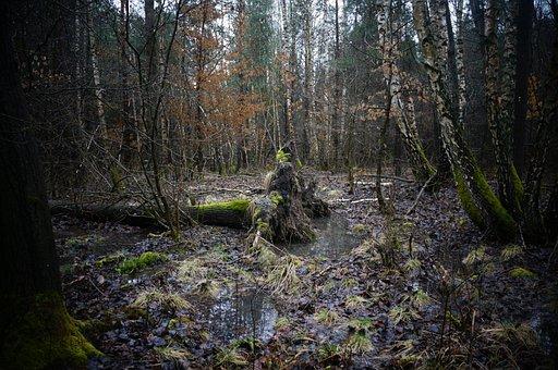 Forest, Nature, Adventure, Wilderness, Wood, Wild