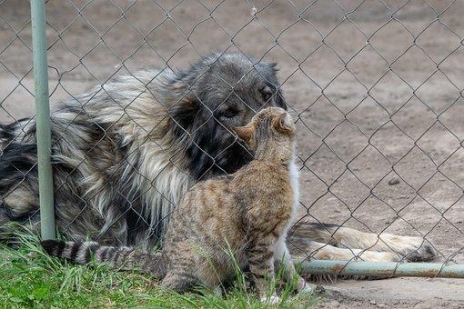 Dog, Cat, Friendship, Animals, Animal, Love