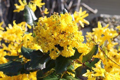 Barberry, Flowers, Bush, Garden Plant, Annex, Yellow