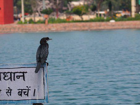 Kurukshetra, Brahma Sarovar, Haryana, Travel, India