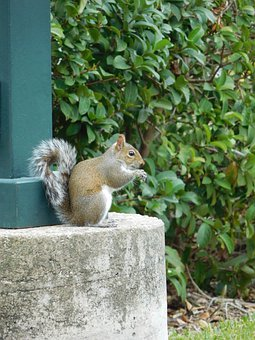 Squirrel, Eat, Animal, Rodent, Cute