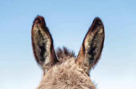 Donkey, Ears, Easter, Animal, Pet, Farm, Blue Animals
