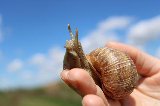 Snail, Hand, Nature, Blue, Sky, Life, Wildlife, Animal