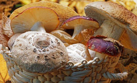 Mushroom, Eatable, Fungus, Season