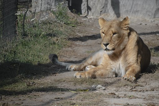 Armenia, Yerevan, Animal, Zoo, Travel, Tourism