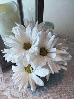 White Daisy, Flower, Center Pieces, Arrangement