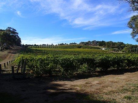 Vines, Australian Vineyards, Viticulture, Landscape