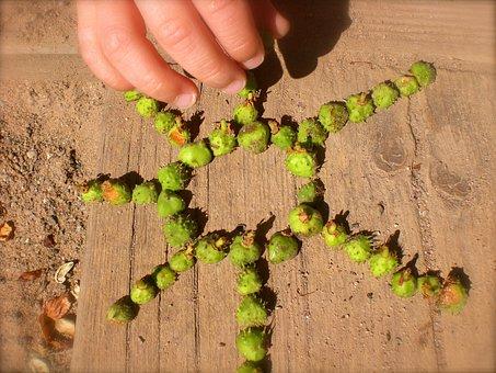 Children's Hands, Hands, Autumn Fruit, Collect