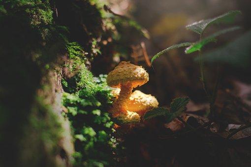 Mushroom, Forest, Autumn, Nature, Forest Floor