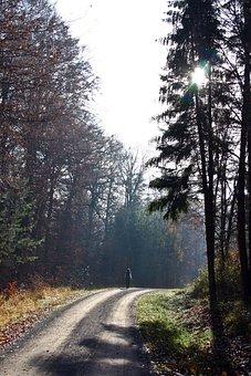 Walk In The Forest, Walk, Forest, Schönbuch, Autumn