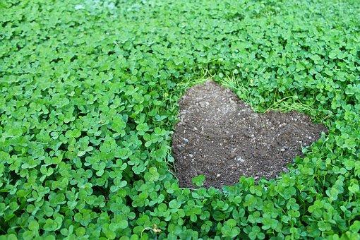 Klee, Lucky Charm, Heart, Green, Four Leaf Clover