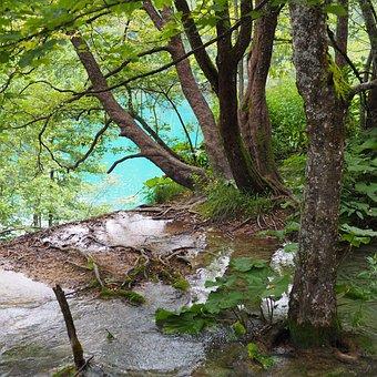 Plitvicka, Soon, Nature, Lake, National Park, Croatia