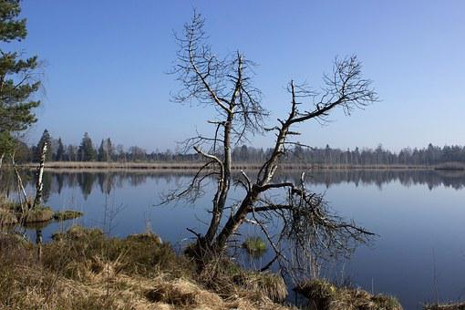 Riedsee, Moor, Wurzacher Ried, Waters, Nature Reserve