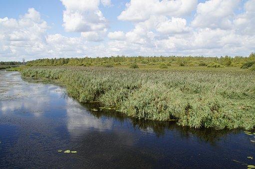 Landscape, Spring Lake, Nature Reserve, Nature