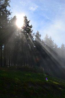 Sunshine, Resin, Firs, Sunbeam, Hike, Landscape, Hiking