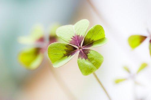 Klee, Lucky Clover, Luck, Lucky Charm, Green, Shamrocks
