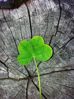 Four Leaf Clover, Luck, Lucky Charm, Shamrocks