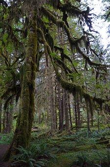Usa, America, Tree, Olympic National Park, Washington