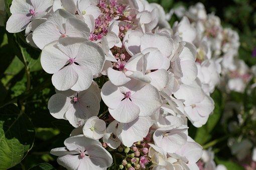 Flower, White, Plant, Nature, Spring, Blossom, Bloom
