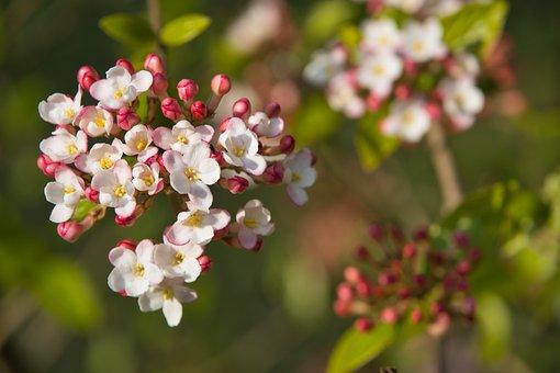 Silk Plant, Plant, Nature, Flower, Green, Bokeh