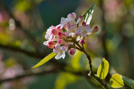 Silk Plant, Plant, Nature, Flower, Green