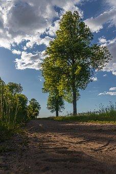 Tree, Way, Sky, Clouds, Village