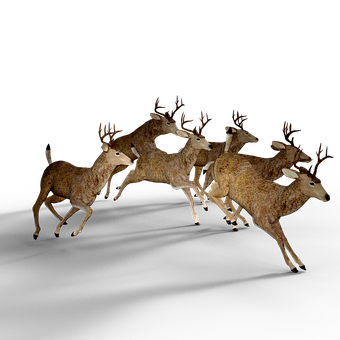 Deer, Pack, Damm Wild Antler, Fight, Forest, Brumpft
