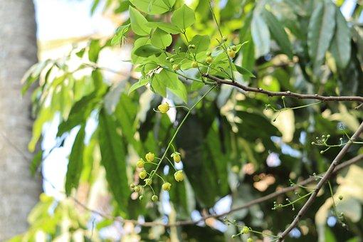 Nature, Kanikonna, Kerala, Landscape, Sky, Tree, Leafs