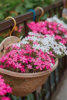 Season, Flower, The End, Months