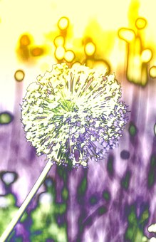 Seeds Was, Ornamental Onion, Plant, Edited, Experiment