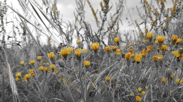 Pollen, Allergies, Allergy, Spring, Flower