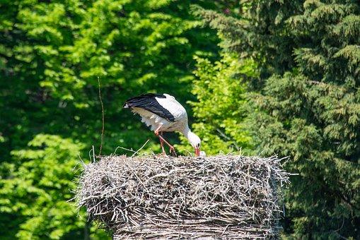 Stork, Nest, Plumage, Animal, Feather, Beak, Bird
