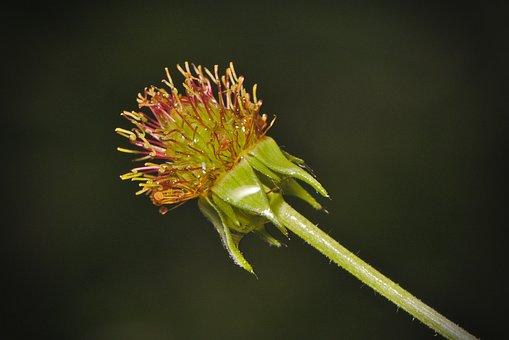 Infructescence, Blossom, Bloom, Green, Macro, Close Up
