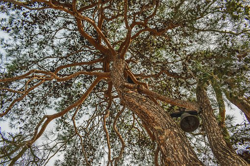 Tree, Branches, Bell, Sky, Nature, Net