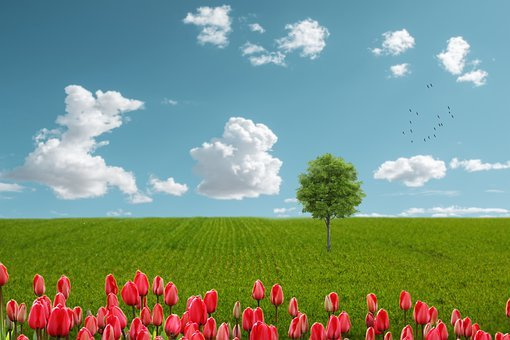 Landscape, Fantasy, Field, Flowers, Sky, Clouds, Spring