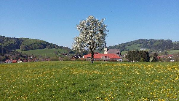Spring, Tree, Bloom, Blossom, Bloom