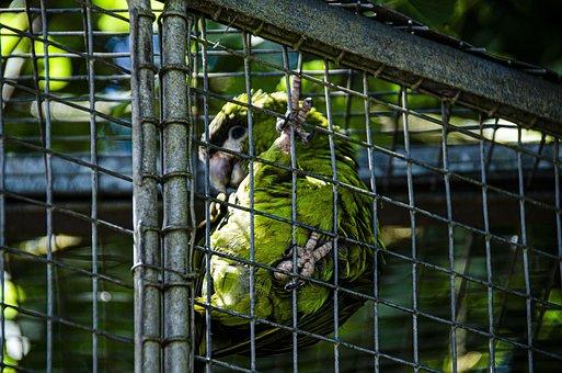Bird, Close Up, Spring, Animals, Macro