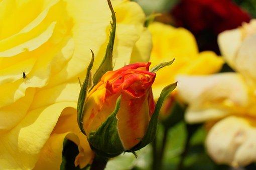 Flower, Nature, Spring, Flowers, Meadow, Garden, Macro